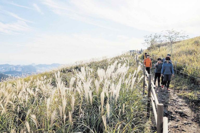 Busan Destinations: Seunghaksan Mountain